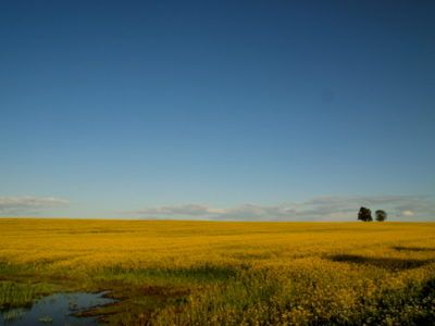Mazovia landscape