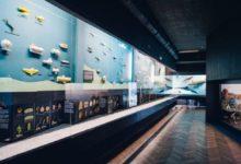 Aquarium in Gdynia